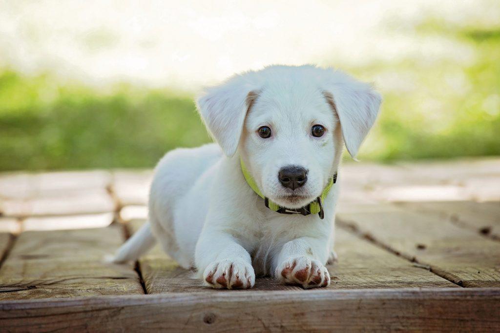 divorcio y mascotas custodia animales abogados