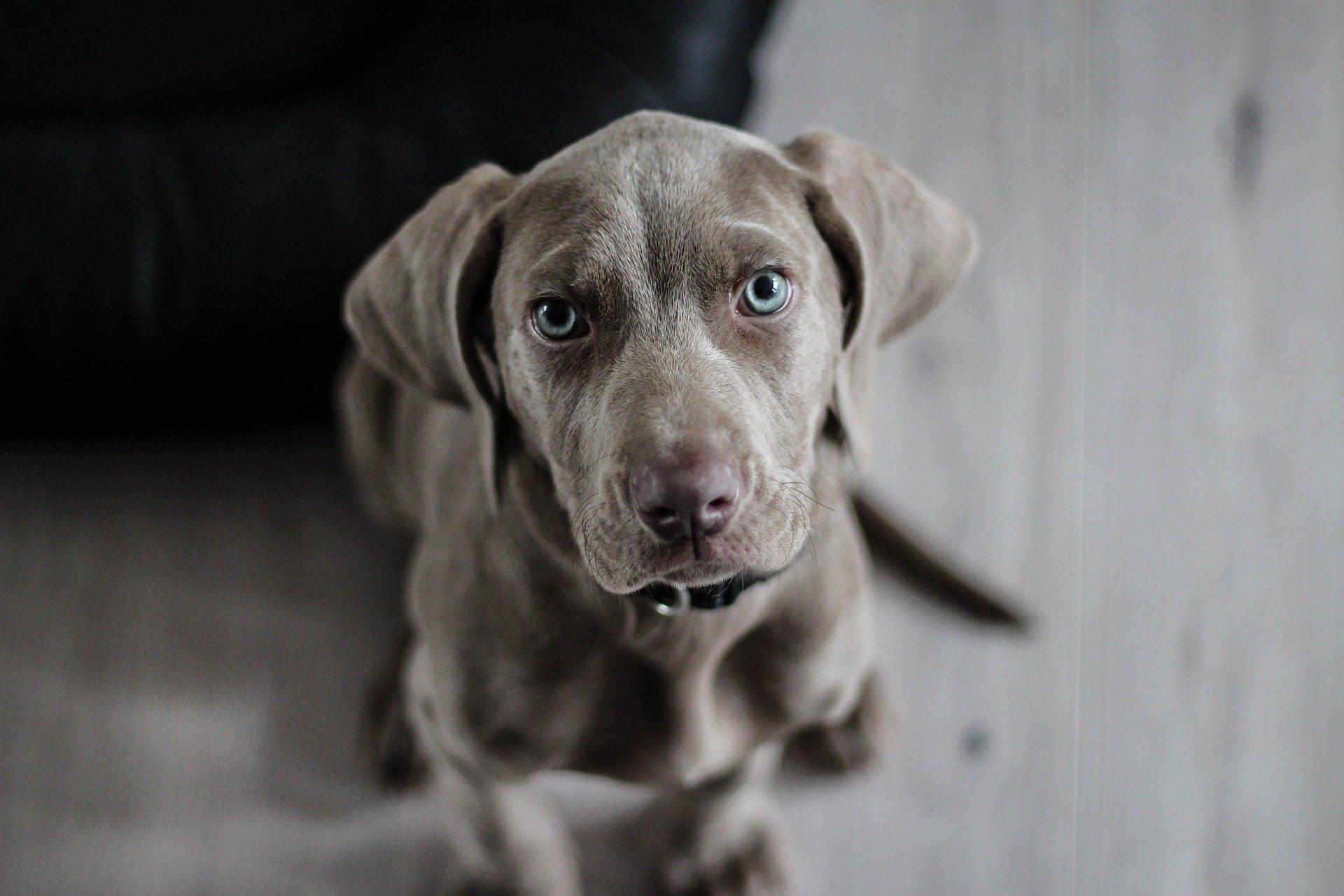 custodia compartida y mascotas